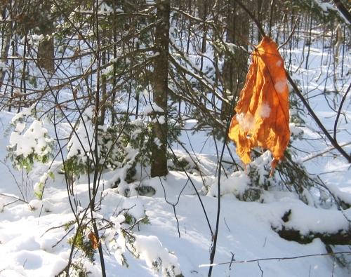 Winter11 - Lone Survivor