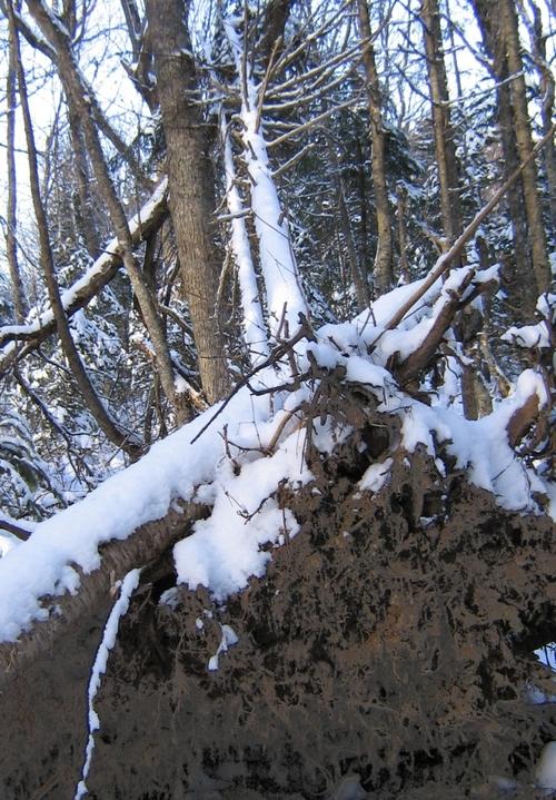 Winter6 - Fallen Giant