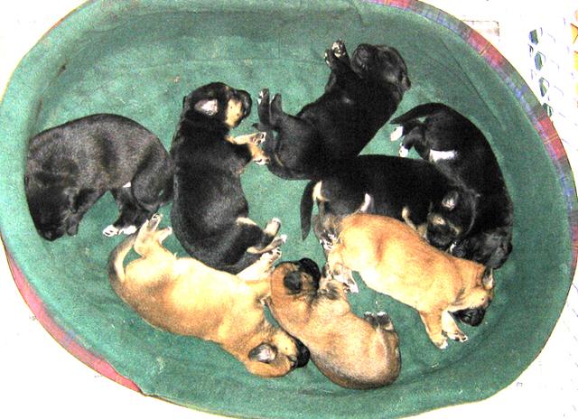 Basket_o_puppies