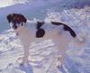 Roxy_snow11