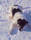 Roxy_snow21