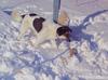 Roxy_snow31